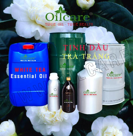 Tinh dầu trà trắng bán buôn sỉ kg lít rẻ white tea essential oil