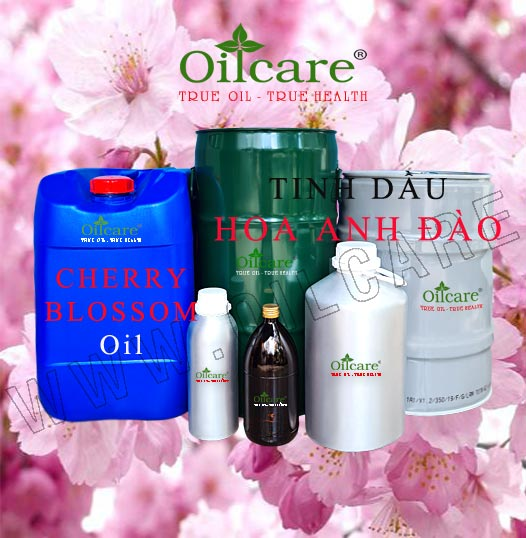 Tinh dầu hoa anh đào bán sỉ lít kg buôn giá rẻ cherry blossom essential oil mua ở đâu