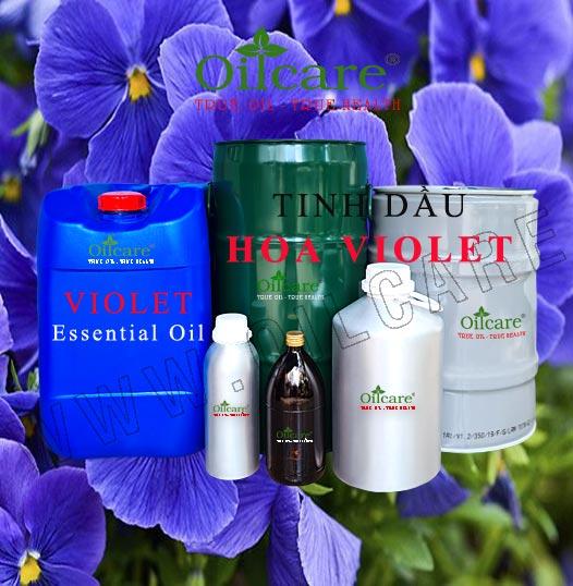 Tinh dầu hoa violet bán sỉ lít kg buôn giá rẻ violet essential oil mua ở đâu