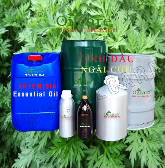 Tinh dầu ngải cứu bán sỉ lít kg buôn giá rẻ Artemisia essential oil mua ở đâu tại tphcm, hà nội, đà nẵng, nha trang